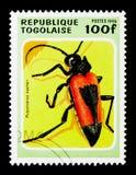 有长触角的甲虫(Purpuricenus kaehleri),甲虫serie,大约1 库存图片