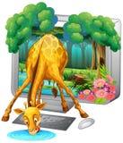 有长颈鹿饮用水的屏幕 库存例证