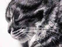 有闭合的眼睛的猫头 图库摄影