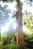 有阳光的密林 免版税库存图片