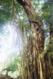 有阳光的密林 库存图片