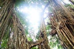 有阳光的密林 免版税库存照片