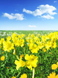有阳光的春天草甸 库存图片