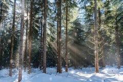 有阳光的森林 免版税库存照片