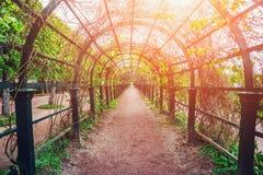 有阳光的绿色隧道在春天公园叶子,自然曲拱走道 免版税库存照片