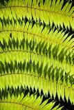 有阳光的绿色叶子 免版税库存照片