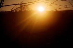 有阳光的Bokeh叶子 库存图片