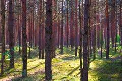 有阴影的绿色森林从太阳 免版税库存图片