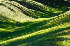有阴影的绿草草坪 免版税库存照片