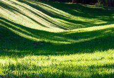 有阴影的绿草草坪 库存照片