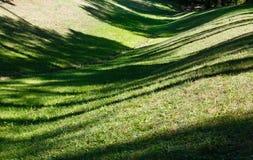 有阴影的绿草草坪 免版税库存图片
