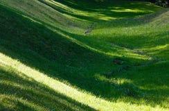 有阴影的绿草草坪 库存图片