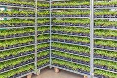 有阶梯形砌接系统的花床植物存贮的温室  库存照片