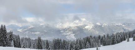 有降雪的冬天高山全景冷杉森林 库存照片