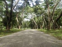 有隧道树的乡下公路 免版税图库摄影