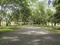 有隧道树的乡下公路 库存图片