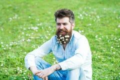 有雏菊或春黄菊的愉快的微笑的人在胡子开花坐绿草草甸 可爱的确信的人 免版税图库摄影