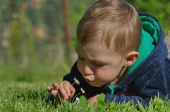 有雏菊的小男孩 库存图片