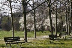 有雏菊的用花装饰的草甸 免版税库存照片