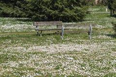 有雏菊的用花装饰的草甸 免版税库存图片