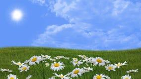 有雏菊的用花装饰的草甸 图库摄影