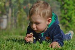 有雏菊的3小男孩 免版税库存图片