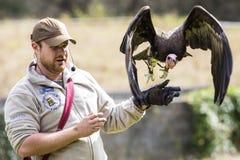 有雕的鸟经理 库存照片