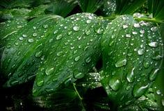 有雨小滴的叶子 免版税库存图片