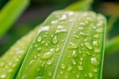 有雨小滴的04叶子 库存照片