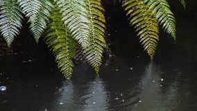 有雨珠和蕨的河 股票视频