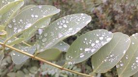 有雨珠的叶子 图库摄影