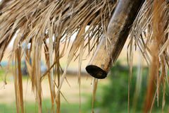 有雨珠的湿竹屋顶在下雨在雨季以后 图库摄影