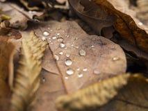 有雨珠的秋天叶子 免版税库存图片