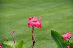 有雨珠盖的花的庭院 库存图片