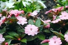 有雨珠盖的花的庭院 图库摄影