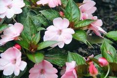 有雨珠盖的花的庭院 免版税库存图片