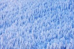 有雪、冰和霜的云杉的树森林 在日出前的桃红色早晨光 冬天微明,在森林Orlicke hor的冷的自然 库存图片