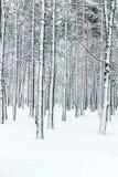 有雪和分支的冬天森林报道的树干 库存照片