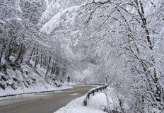 有雪和树的柏油路 库存照片