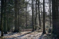 有雪的丹麦冬天山毛榉森林 免版税库存图片