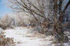 有雪的明亮的冬天森林,与树的美好的狂放的风景和沼地 免版税库存照片