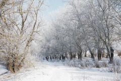 有雪的明亮的冬天森林,与树的美好的狂放的风景和沼地 库存照片