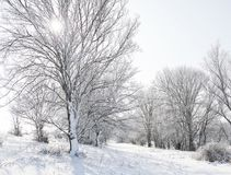 有雪的明亮的冬天森林,与树的美好的狂放的风景和沼地 免版税库存图片