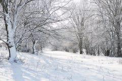 有雪的明亮的冬天森林,与树的美好的狂放的风景和沼地 库存图片