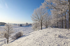 有雪的落叶树森林 免版税图库摄影
