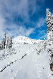 有雪的道路盖子在天堂区域,更加多雨mt风景的看法,华盛顿,美国 免版税库存图片