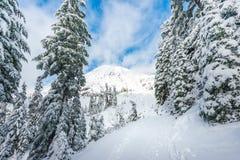有雪的道路盖子在天堂区域, mt更加多雨的国家公园,华盛顿,美国风景看法  图库摄影