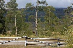 有雪的,早期的秋天栅栏在怀俄明 库存图片