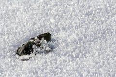有雪花和雪水晶的一片冻叶子在冬天 图库摄影