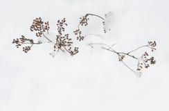 有雪花的冬天植物 库存图片